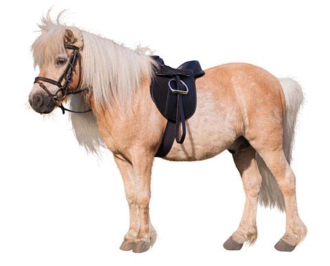 selle pour poney