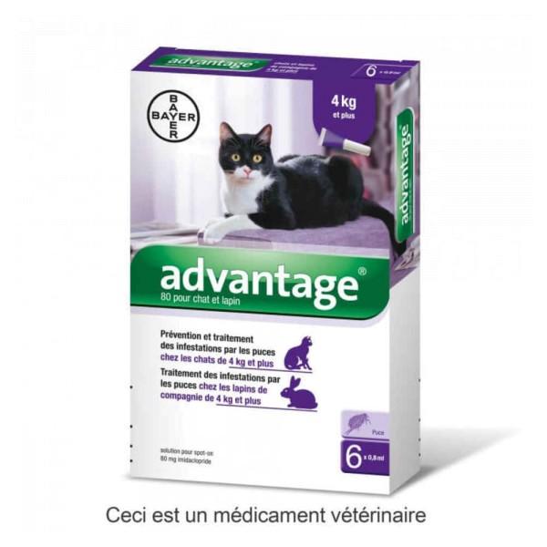 advantage 80 pour chat