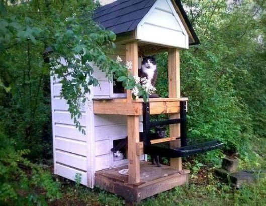 cabane exterieur pour chat