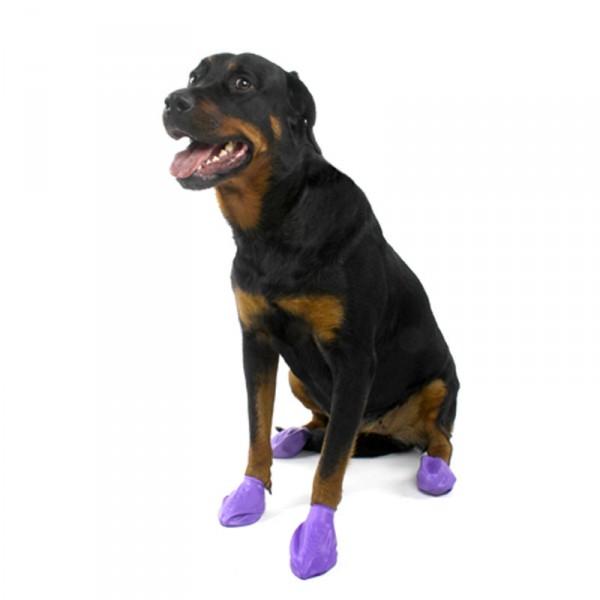 chaussure chien