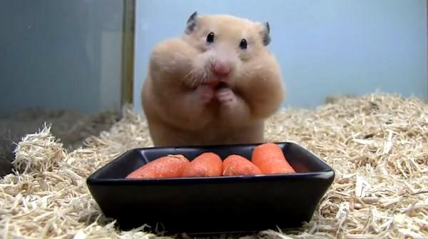 joue de hamster
