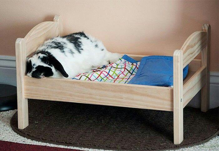 lit pour lapin