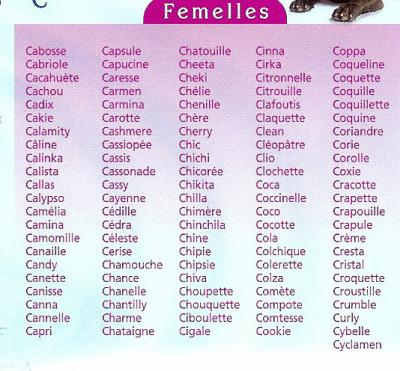 nom pour chaton