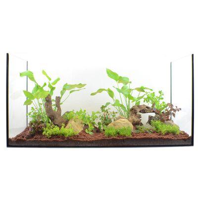 plante pour aquarium
