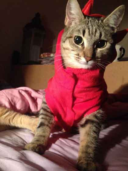 pull pour chat
